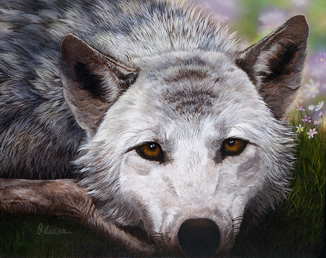 Wolf portrait with spring flowers
